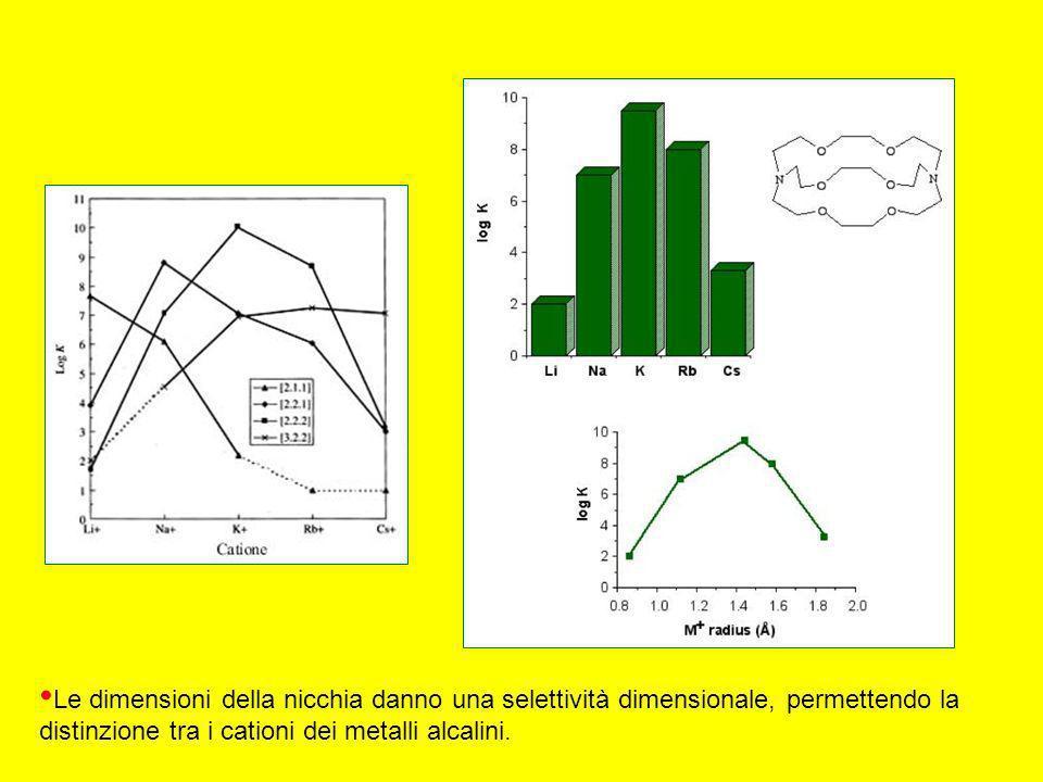 Le dimensioni della nicchia danno una selettività dimensionale, permettendo la distinzione tra i cationi dei metalli alcalini.