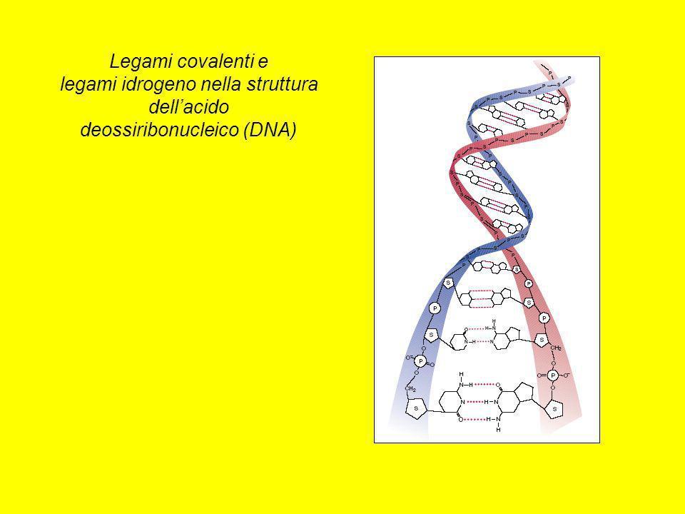 Legami covalenti e legami idrogeno nella struttura dell'acido deossiribonucleico (DNA)