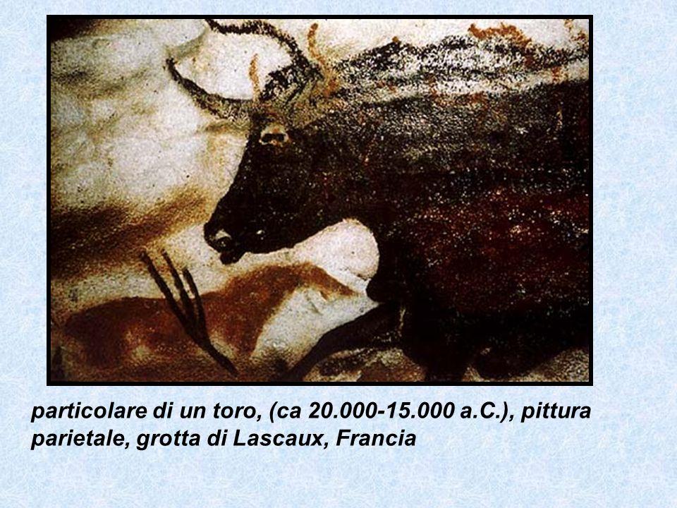 particolare di un toro, (ca 20. 000-15. 000 a. C