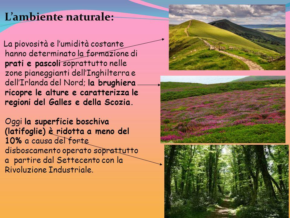 L'ambiente naturale: