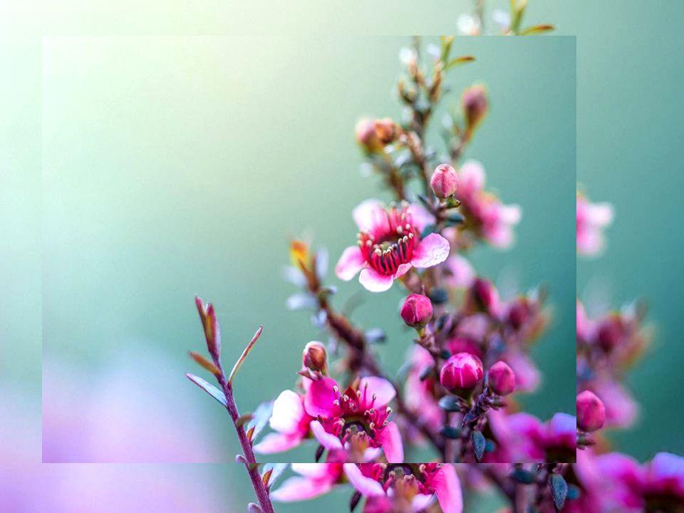 Sono in ogni fiore che sboccia,