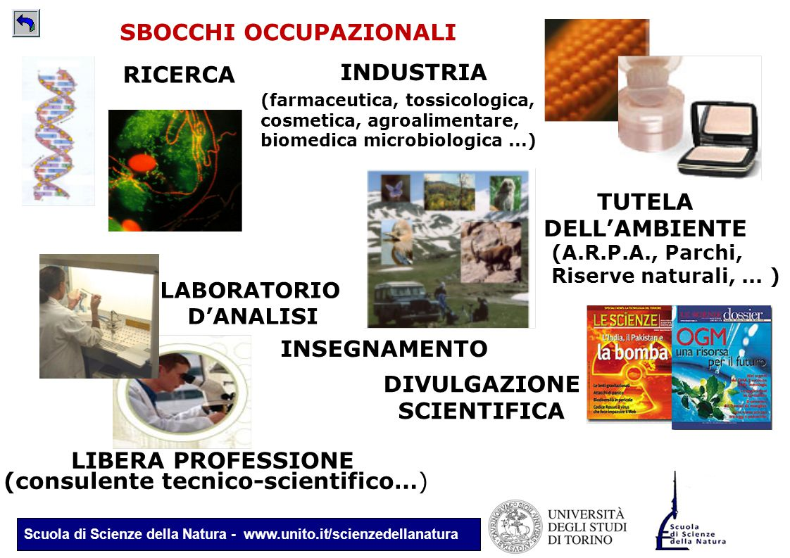 (consulente tecnico-scientifico…)