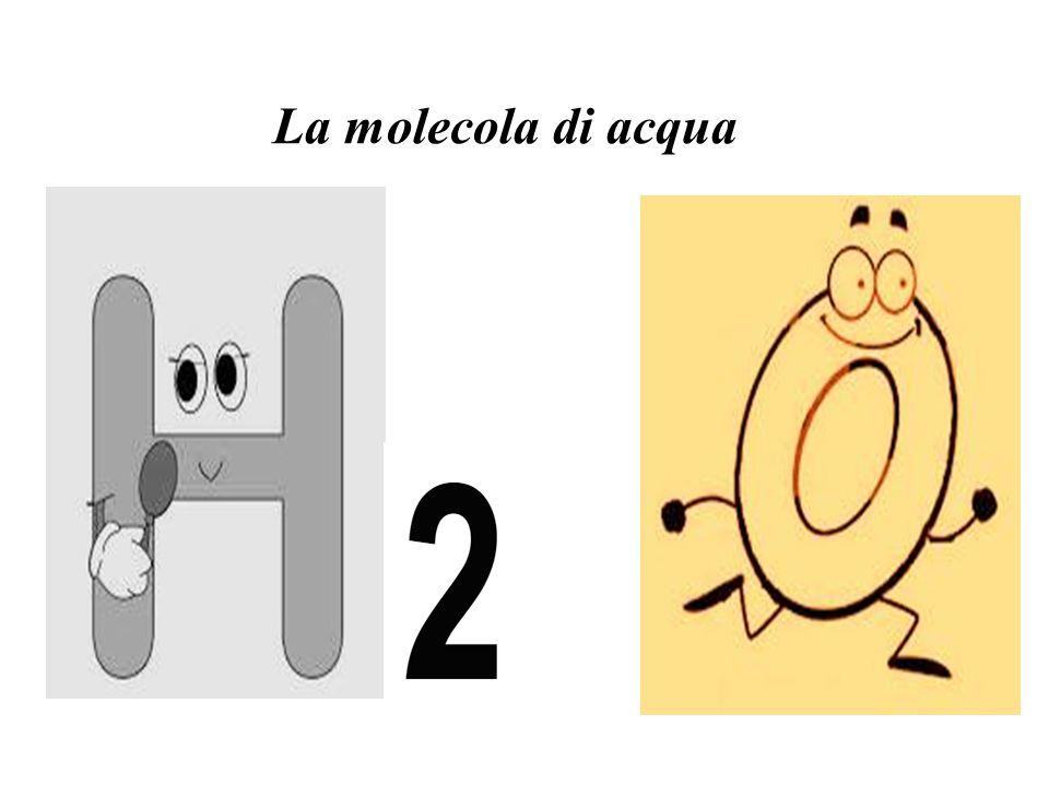 La molecola di acqua