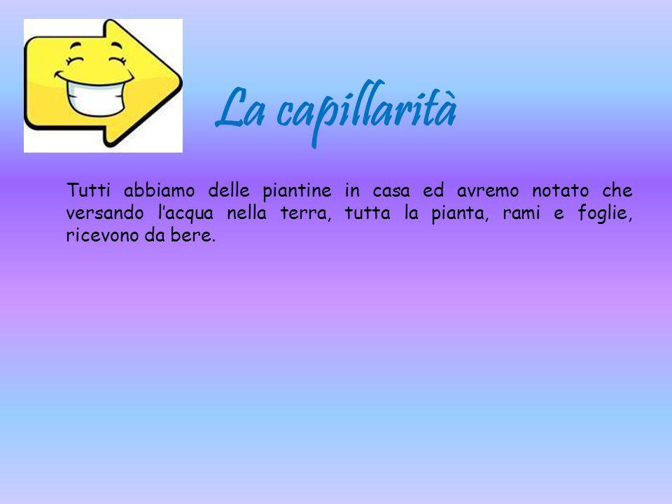 La capillarità
