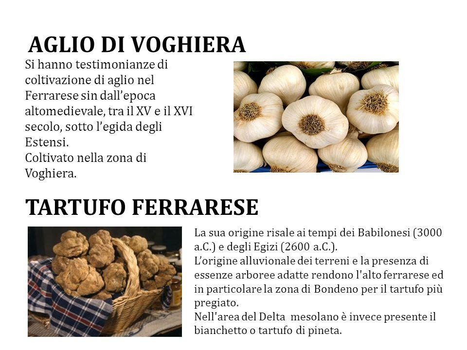 AGLIO DI VOGHIERA TARTUFO FERRARESE
