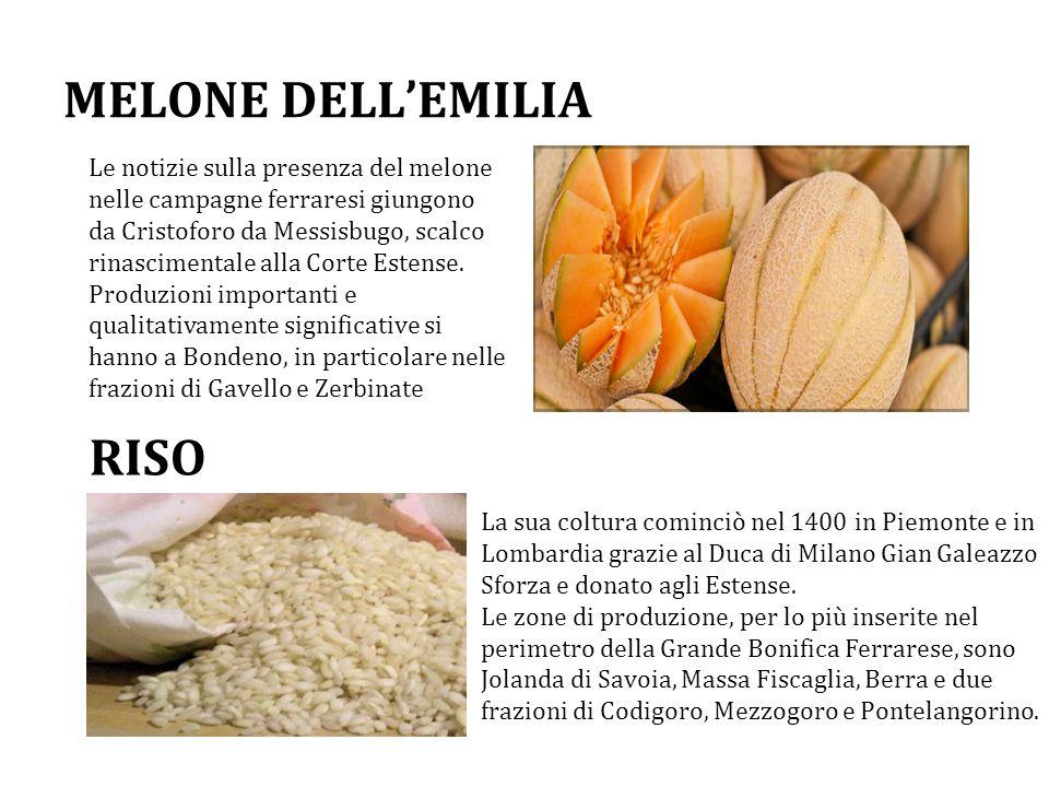 MELONE DELL'EMILIA RISO