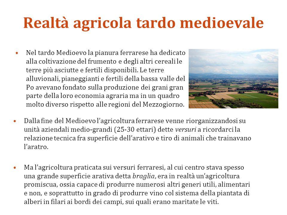 Realtà agricola tardo medioevale