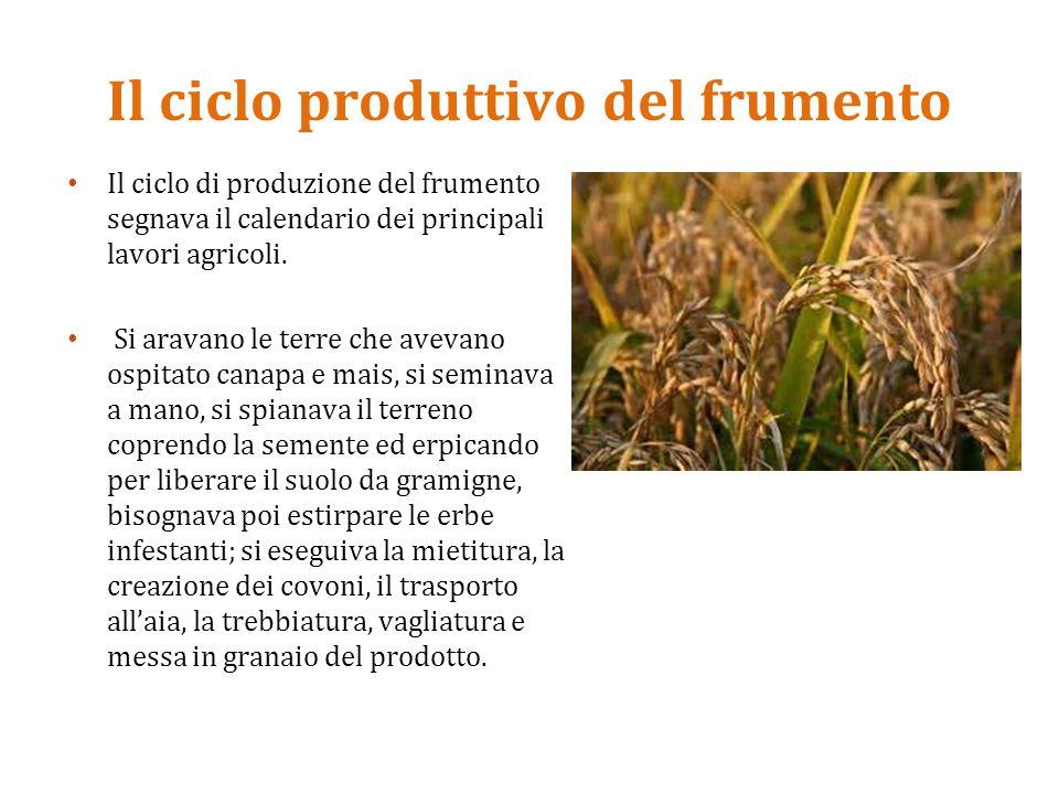 Il ciclo produttivo del frumento