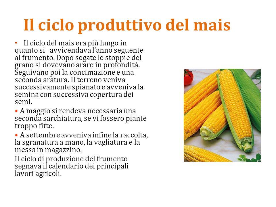 Il ciclo produttivo del mais
