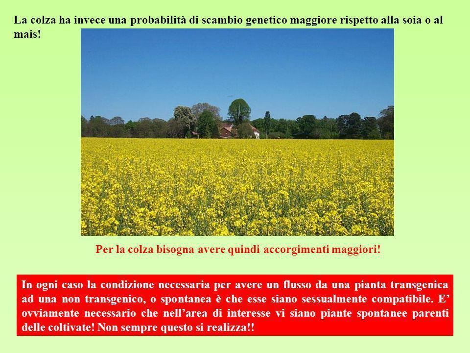 La colza ha invece una probabilità di scambio genetico maggiore rispetto alla soia o al mais!