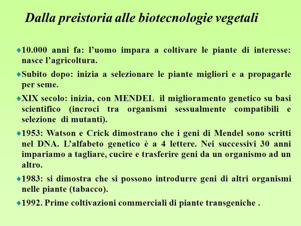 Dalla preistoria alle biotecnologie vegetali