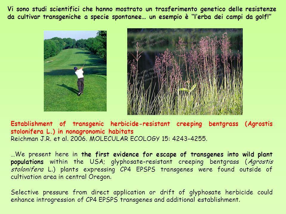 Vi sono studi scientifici che hanno mostrato un trasferimento genetico delle resistenze da cultivar transgeniche a specie spontanee… un esempio è l'erba dei campi da golf!