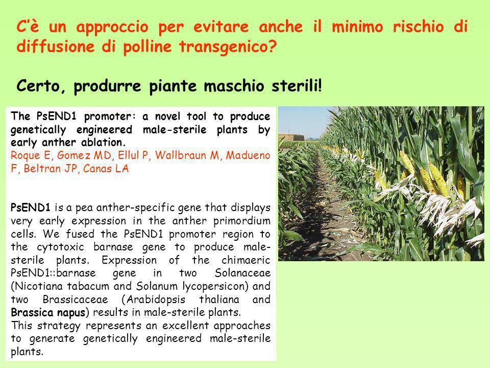 Certo, produrre piante maschio sterili!