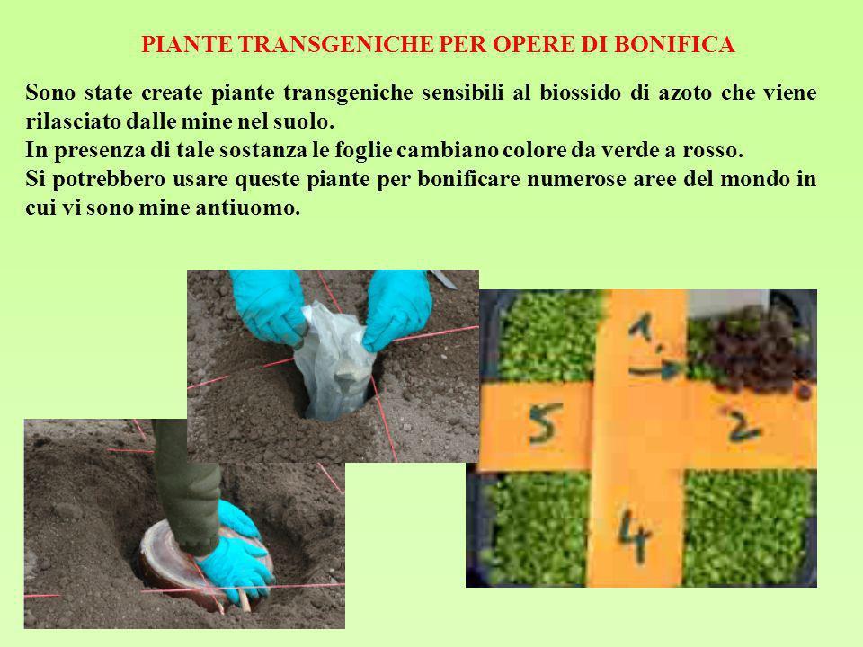 PIANTE TRANSGENICHE PER OPERE DI BONIFICA