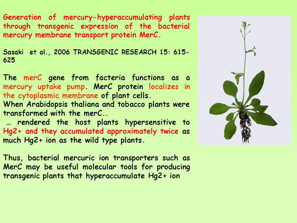 Generation of mercury-hyperaccumulating plants through transgenic expression of the bacterial mercury membrane transport protein MerC.