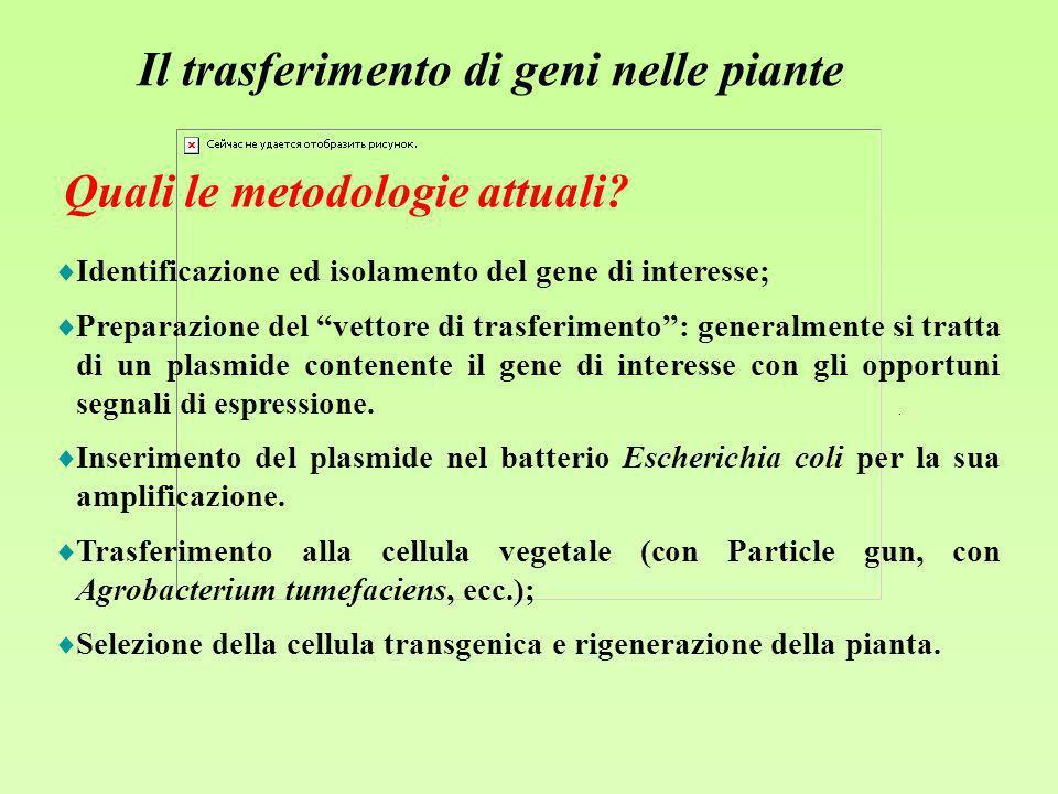 Il trasferimento di geni nelle piante