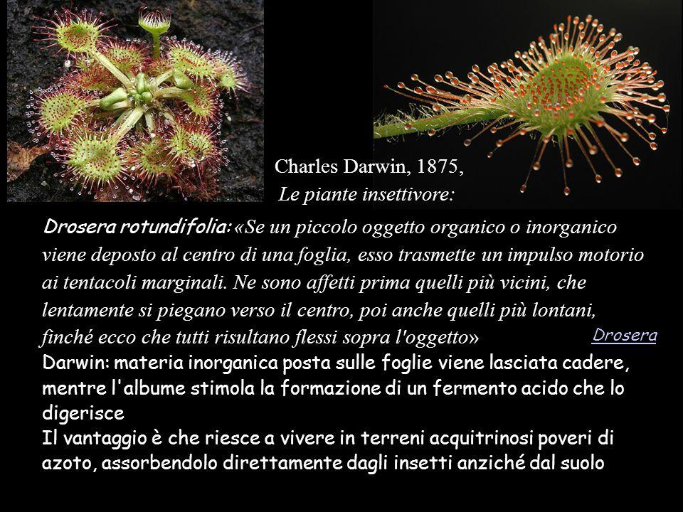 Le piante insettivore: