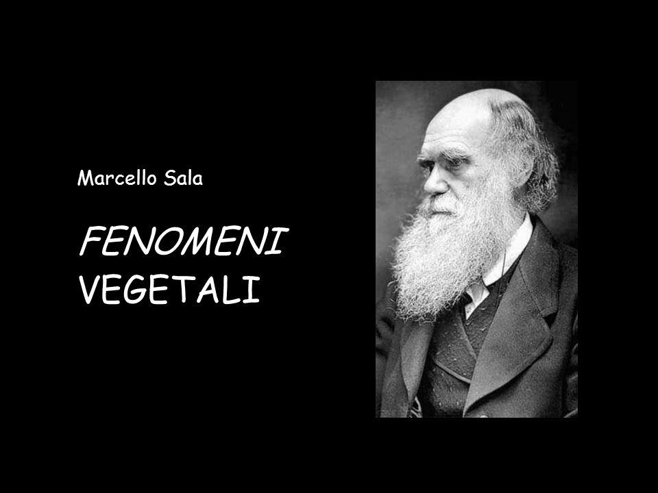 Marcello Sala FENOMENI VEGETALI