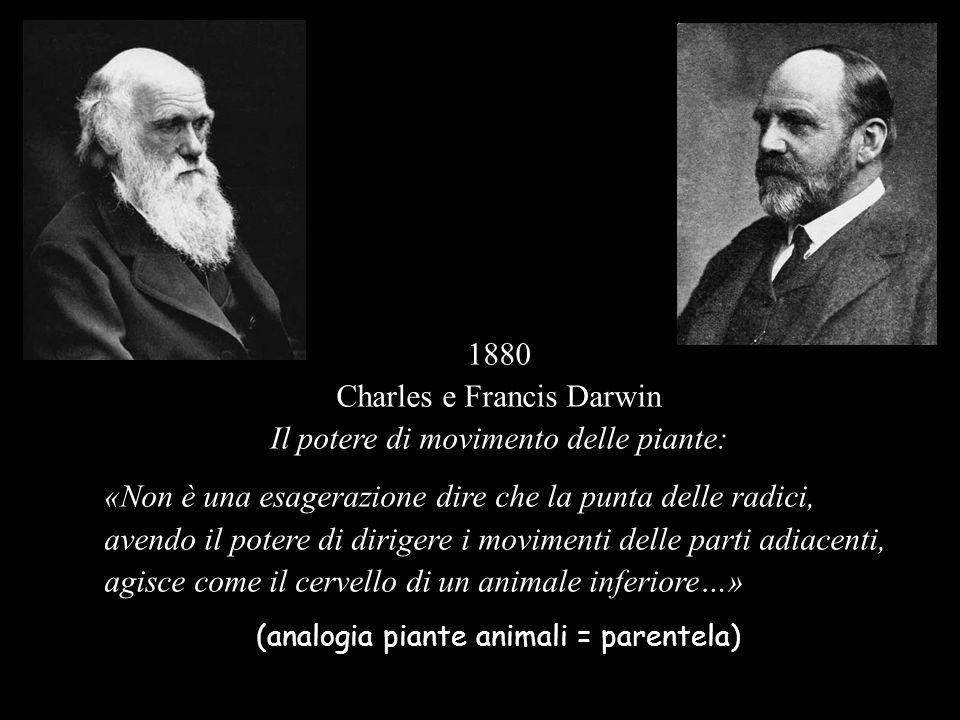 Charles e Francis Darwin Il potere di movimento delle piante: