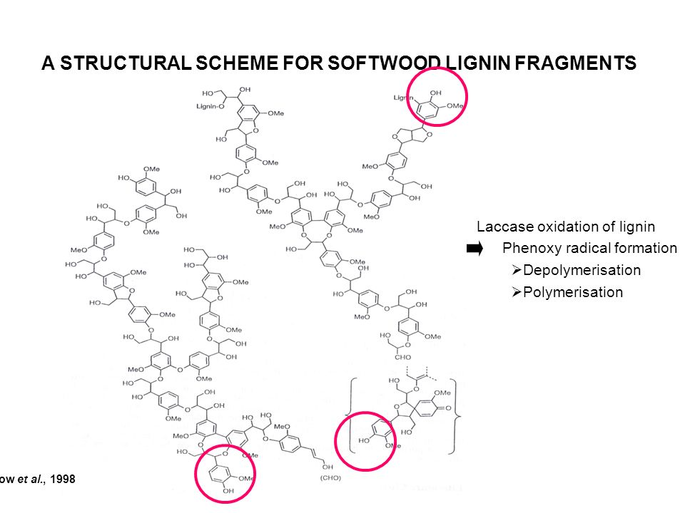 A STRUCTURAL SCHEME FOR SOFTWOOD LIGNIN FRAGMENTS