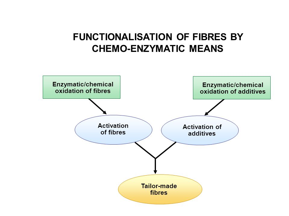 FUNCTIONALISATION OF FIBRES BY CHEMO-ENZYMATIC MEANS
