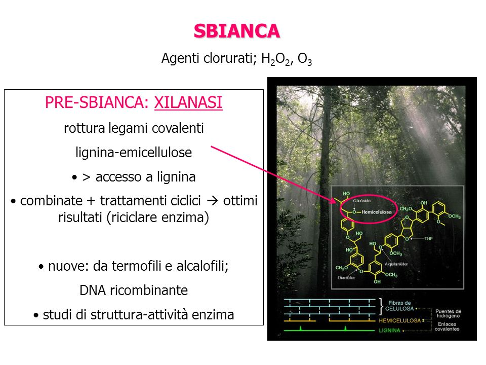 SBIANCA PRE-SBIANCA: XILANASI Agenti clorurati; H2O2, O3