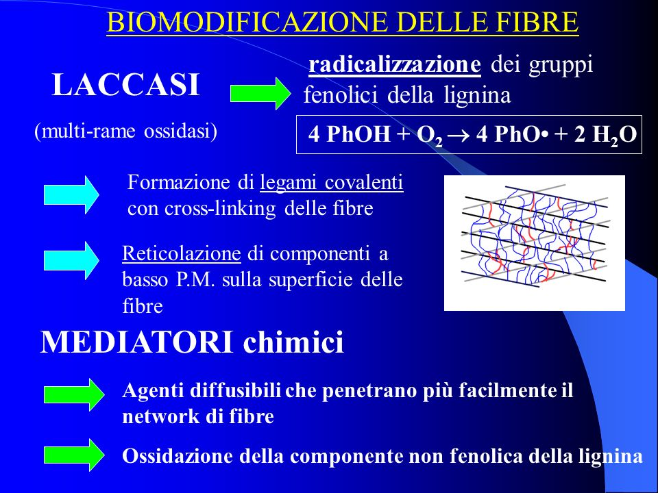 LACCASI MEDIATORI chimici BIOMODIFICAZIONE DELLE FIBRE