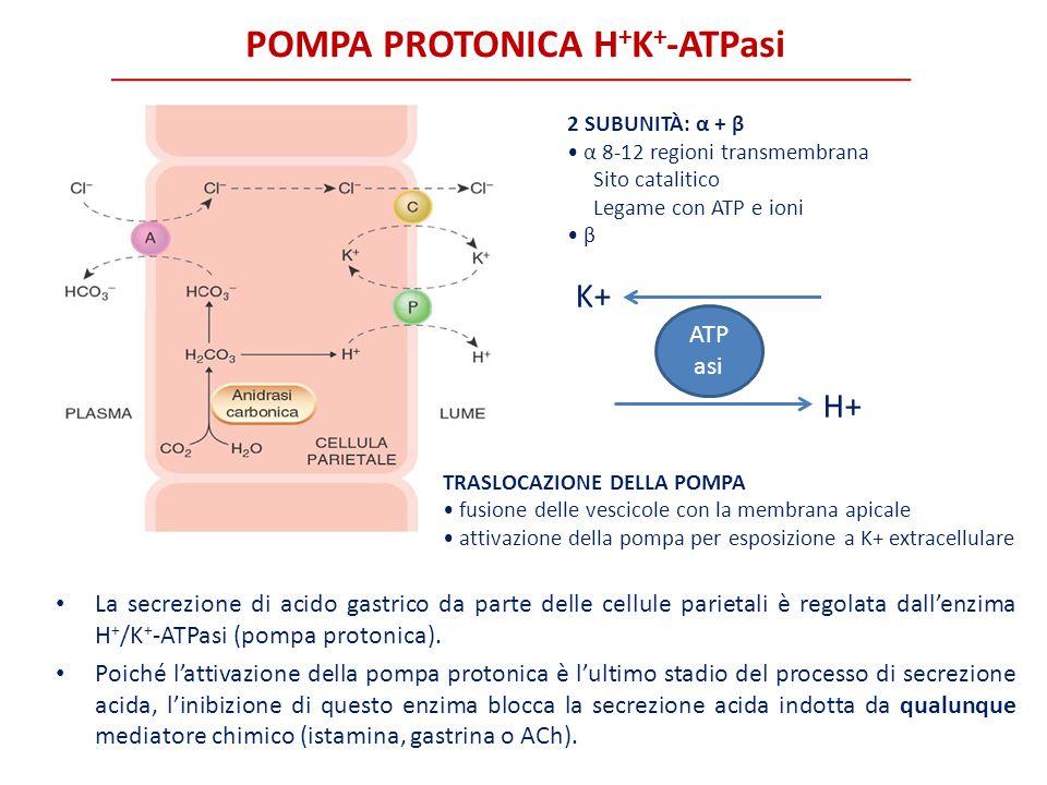POMPA PROTONICA H+K+-ATPasi