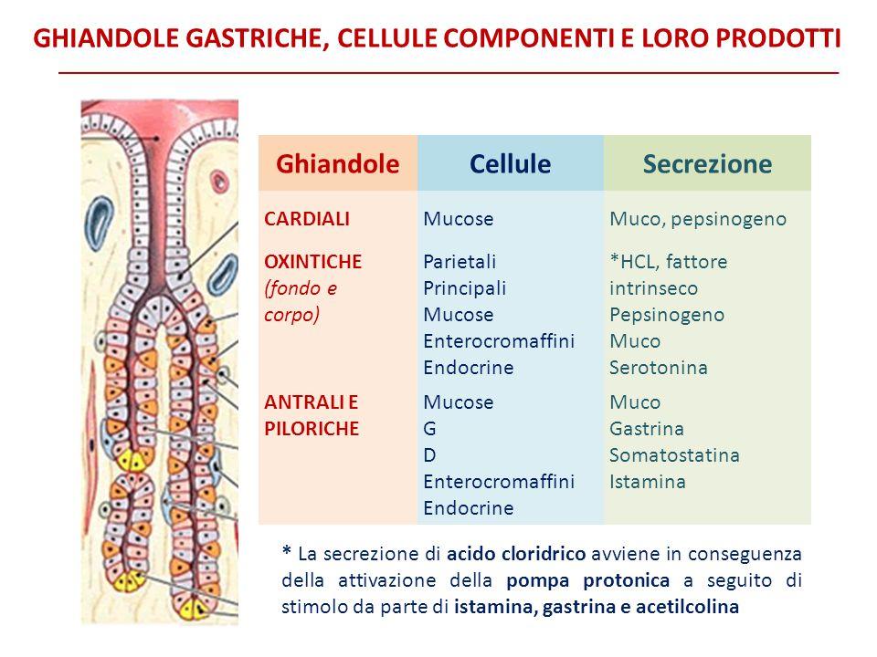 Ghiandole Cellule Secrezione