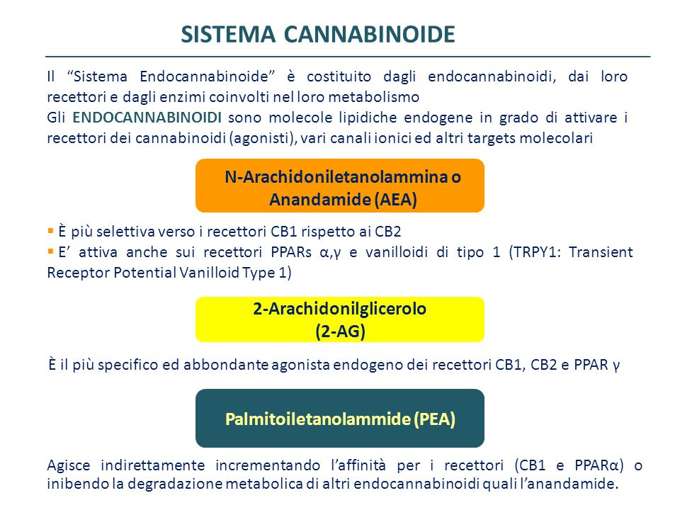 SISTEMA CANNABINOIDE N-Arachidoniletanolammina o Anandamide (AEA)