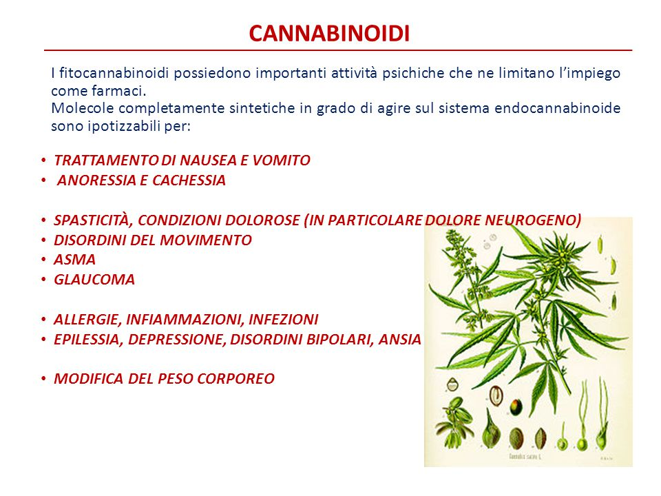 CANNABINOIDI I fitocannabinoidi possiedono importanti attività psichiche che ne limitano l'impiego come farmaci.