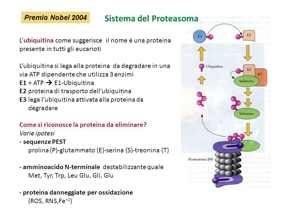 Sistema del Proteasoma