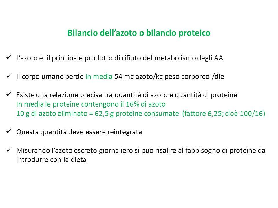 Bilancio dell'azoto o bilancio proteico