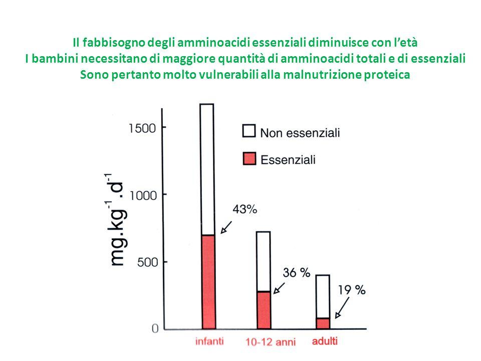Il fabbisogno degli amminoacidi essenziali diminuisce con l'età