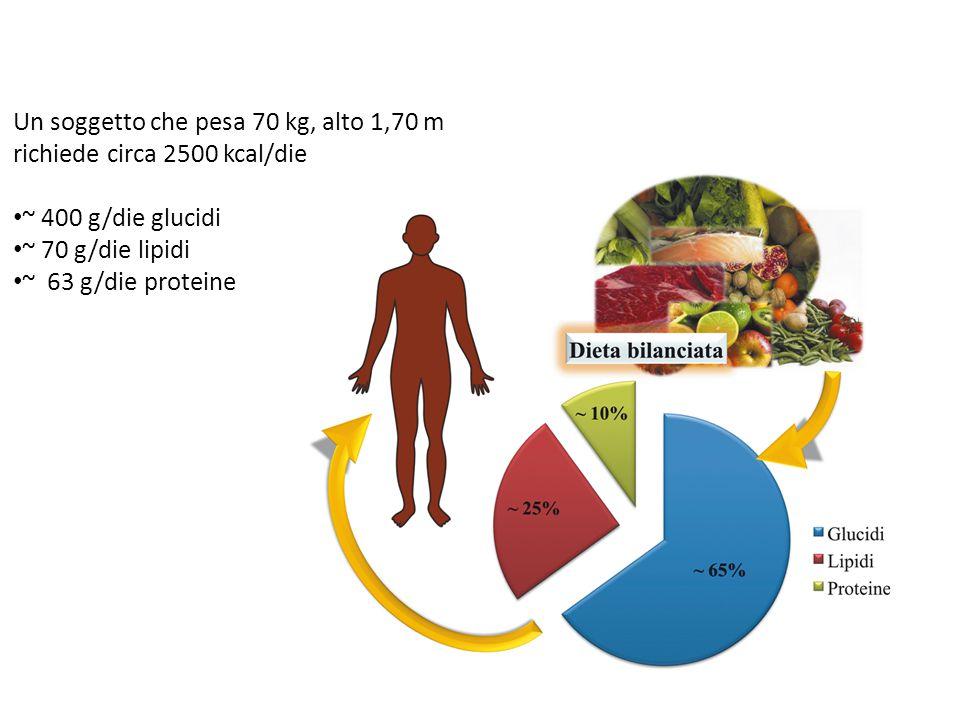 Un soggetto che pesa 70 kg, alto 1,70 m richiede circa 2500 kcal/die