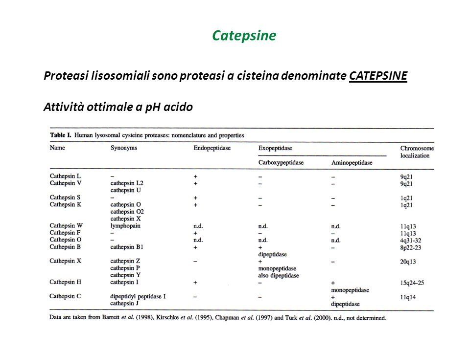 Catepsine Proteasi lisosomiali sono proteasi a cisteina denominate CATEPSINE.