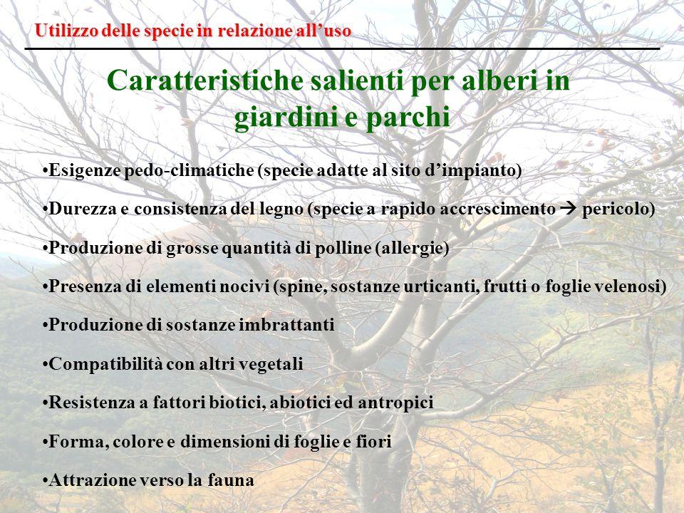 Caratteristiche salienti per alberi in