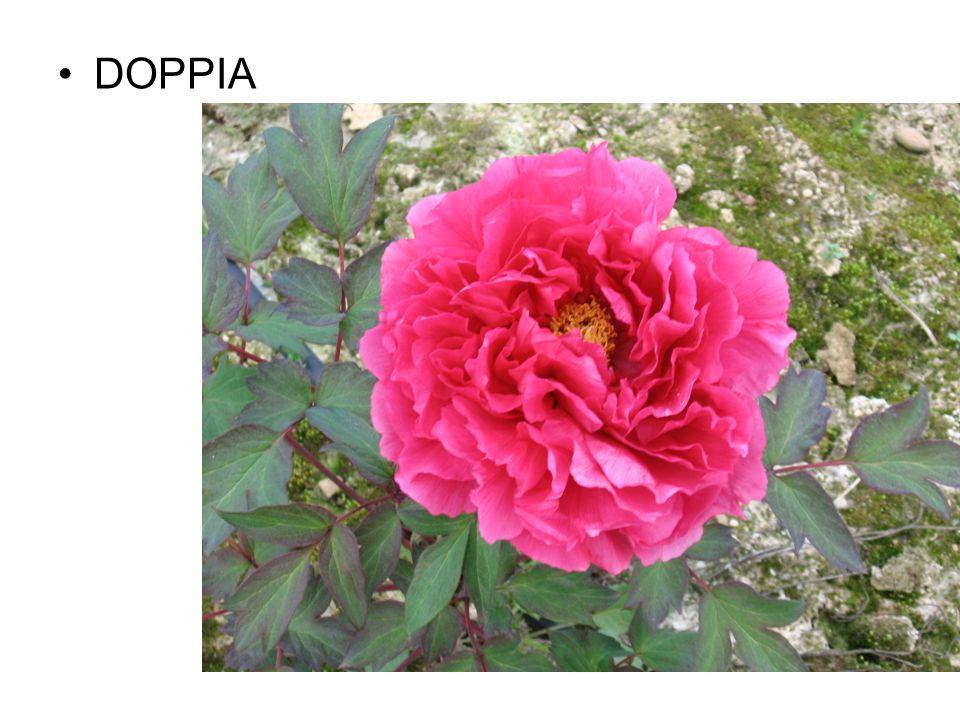 DOPPIA