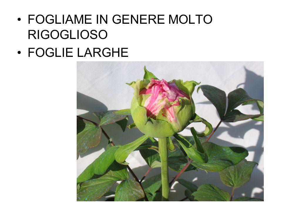 FOGLIAME IN GENERE MOLTO RIGOGLIOSO