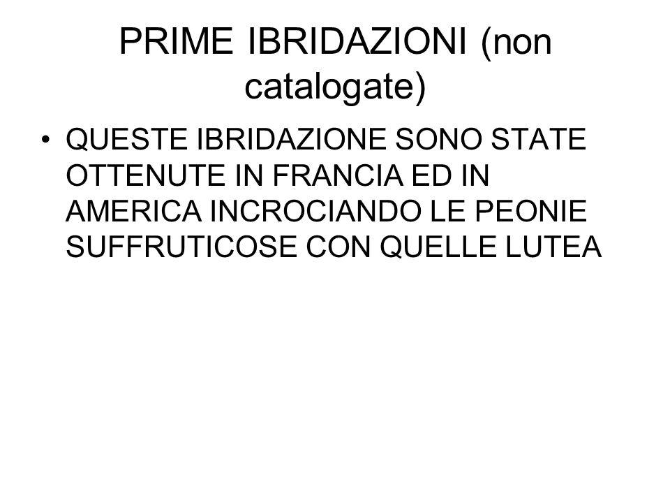 PRIME IBRIDAZIONI (non catalogate)