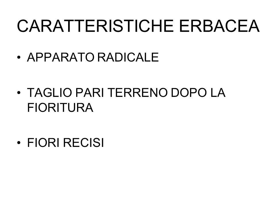 CARATTERISTICHE ERBACEA
