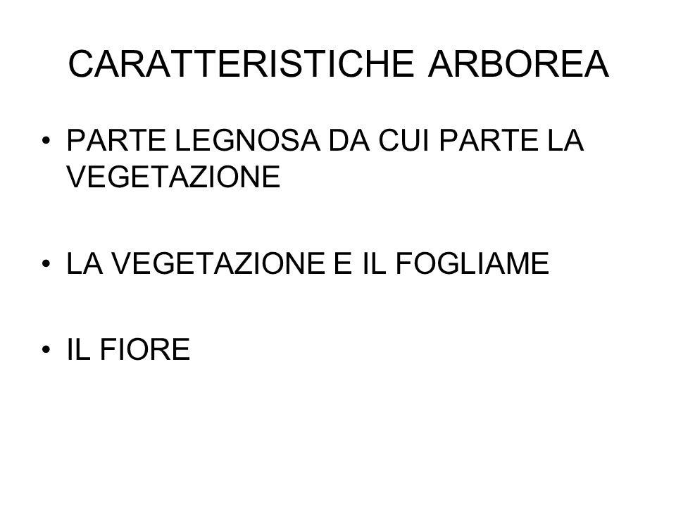 CARATTERISTICHE ARBOREA