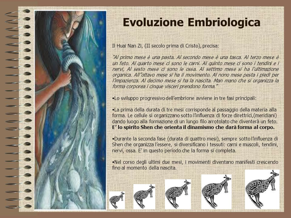 Evoluzione Embriologica