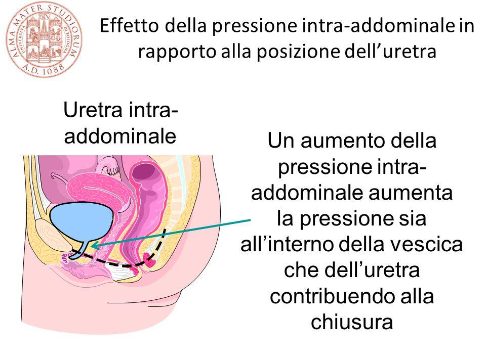 Uretra intra-addominale