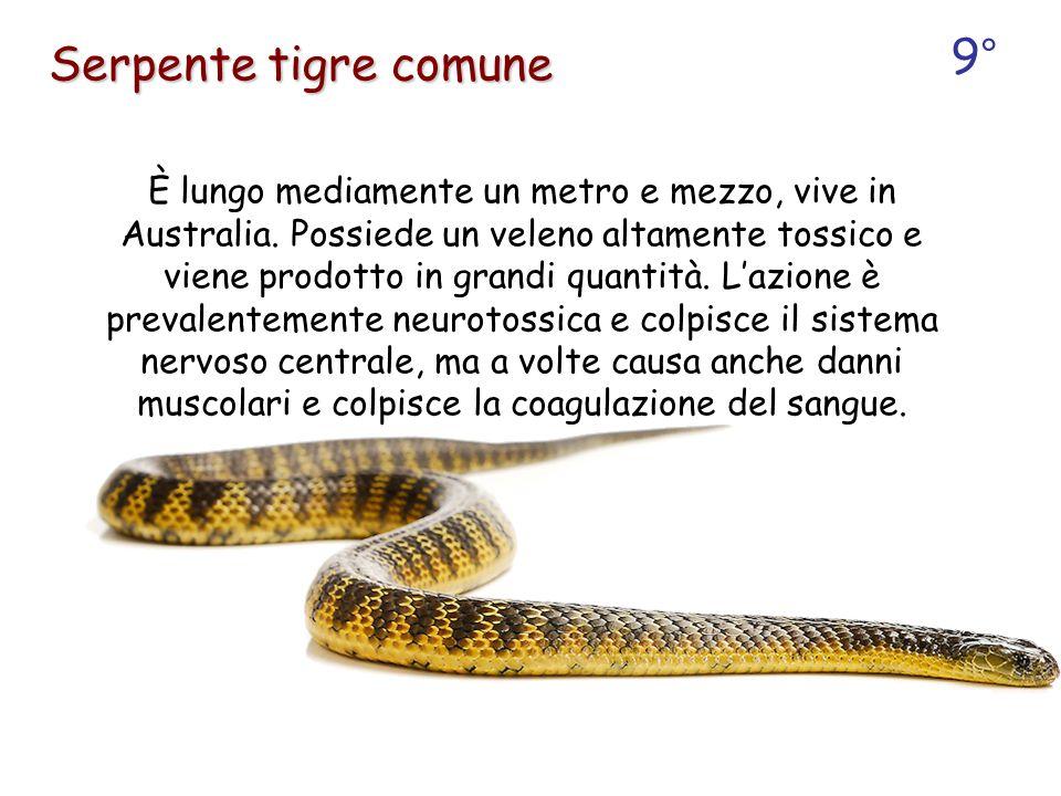9° Serpente tigre comune