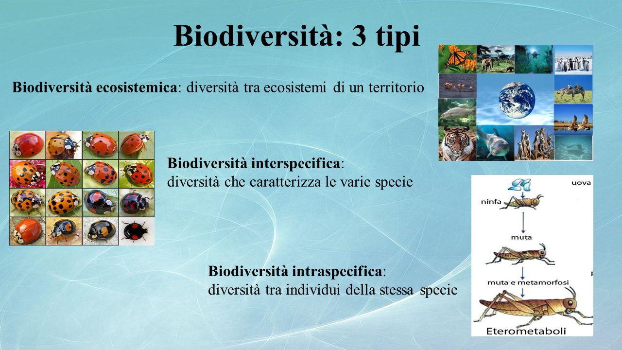 Biodiversità: 3 tipi Biodiversità ecosistemica: diversità tra ecosistemi di un territorio. Biodiversità interspecifica: