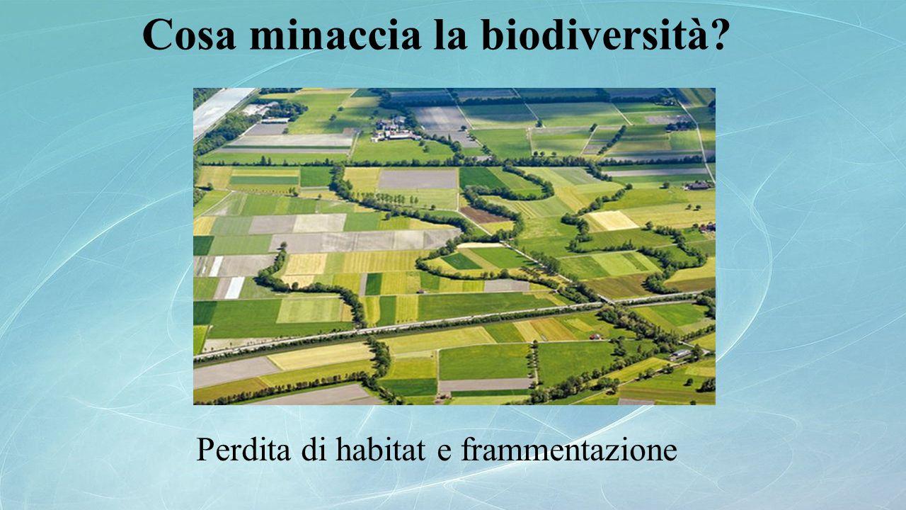 Cosa minaccia la biodiversità