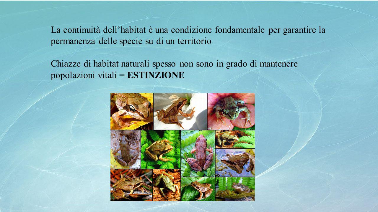 La continuità dell'habitat è una condizione fondamentale per garantire la permanenza delle specie su di un territorio