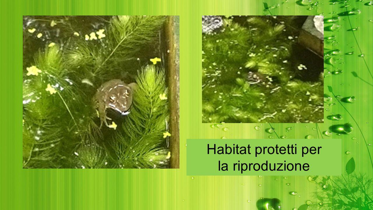 Habitat protetti per la riproduzione