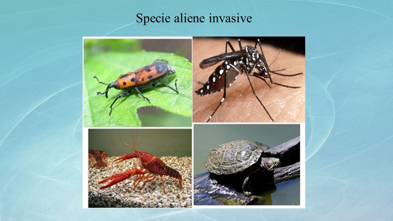 Specie aliene invasive